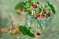Картинка листья, земляника, ваза, этюд