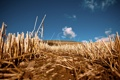Картинка поле, небо, макро, природа