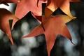 Картинка листья, блики, фон, красные, кленовые