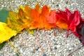 Картинка листья, камни, осень, радуга, клён