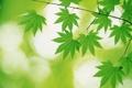 Картинка лето, лист, зеленые, листочки