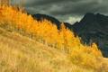 Картинка осень, лес, деревья, горы, Колорадо, США, роща