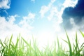 Картинка небо, трава, макро, природа, фото