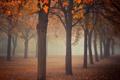 Картинка осень, деревья, парк