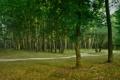 Картинка лес, лето, зелёный, тропинка