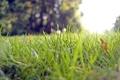 Картинка трава, солнце, зелень, боке, деревья, природа, свет