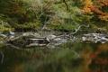 Картинка деревья, лес, каряга, озеро, камни