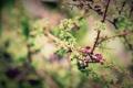 Картинка Макро, Природа, Фото, Дерево, Весна, Листья, Ветки