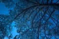 Картинка зима, небо, снег, ночь, дерево