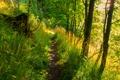 Картинка лес, трава, солнце, деревья, мох, пень, пропинка