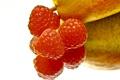 Картинка отражение, малина, фон, ягода, фрукт, груша