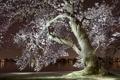 Картинка город, Сакура, река, весна, цветение, ночь, вечер