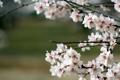 Картинка ветки, дерево, весна