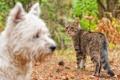 Картинка взгляд, собака, кошак, котяра