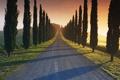 Картинка дорога, трава, деревья, закат, дом, обои, колосья