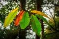 Картинка осень, листья, деревья, ветка