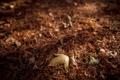 Картинка лес, листья, иголки