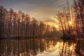 Картинка иней, лес, деревья, река, утро, золотое