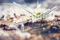 Картинка трава, графика, blur, замерзшая, размытое, frozen. grass