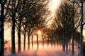 Картинка солнце, деревья, туман, Дорога