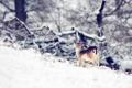 Картинка зима, природа, олень
