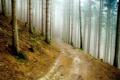 Картинка мох, дорога, туман, природа, лес, дымка