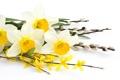 Картинка цветы, ветки, нарциссы