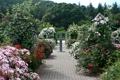 Картинка дорожки, розы, Англия, кусты, деревья, сад, разноцветные