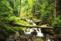 Картинка каскад, лес, поток, слизь, дерево