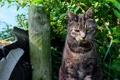 Картинка кот, морда, злюка, взгляд