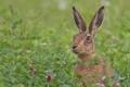 Картинка заяц, луг, трава, цветы