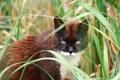 Картинка глаза, кот, взгляд, кошак, травка, котяра