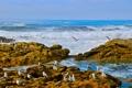 Картинка чайки, камни, побережье, Атлантический океан, волны, птицы