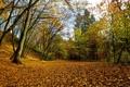 Картинка природа, листья, осень, парк