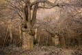 Картинка природа, лес, дерево