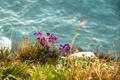 Картинка трава, вода, цветы, полевые