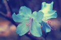 Картинка макро, природа, голубые, цветочки