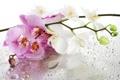 Картинка стекло, вода, цветы, капельки, орхидея