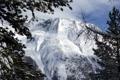 Картинка снег, деревья, гора