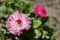 Картинка цветок, макро, цветы, весна