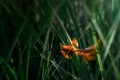 Картинка трава, лист, макро