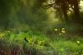 Картинка лес, лето, трава, деревья, цветы, бабочка