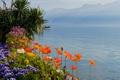 Картинка небо, цветы, горы, озеро