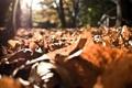 Картинка осень, листья, солнце, лучи, листва, солнечные лучи, autumn