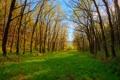 Картинка Природа, трава, деревья