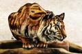 Картинка усы, тигр, животное, хищник, лапы, арт, окрас