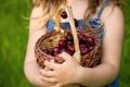 Картинка корзина, девочка, вишни