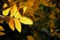 Картинка осень, свет, природа, лист, желтое, на черном