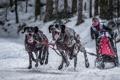 Картинка собаки, фон, гонка, спорт