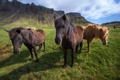 Картинка горы, лошади, Исландия, Icelandic horses
